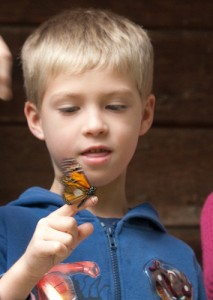 boy with monarch on hand