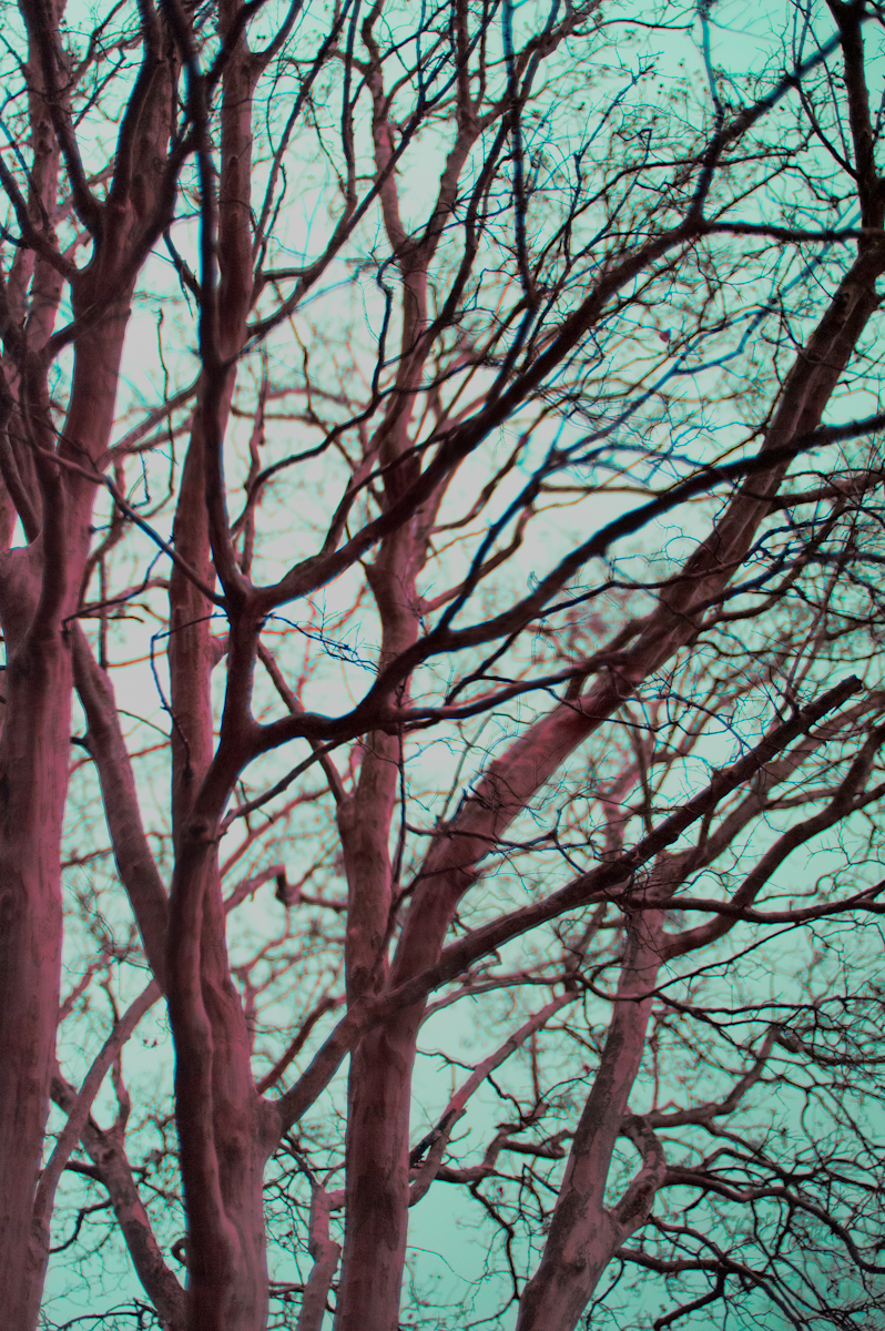 trees outside lemuria altered