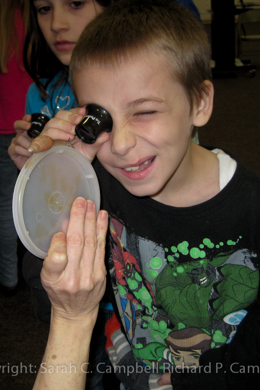 4th grader looks at wolfsnail