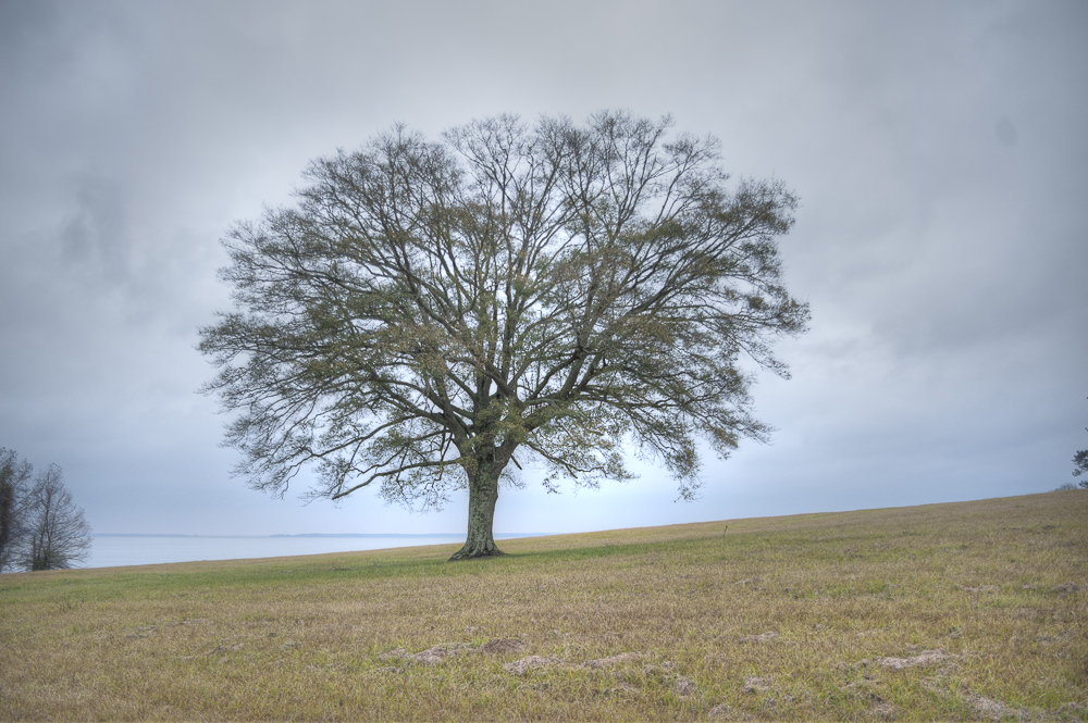 fractal tree 1